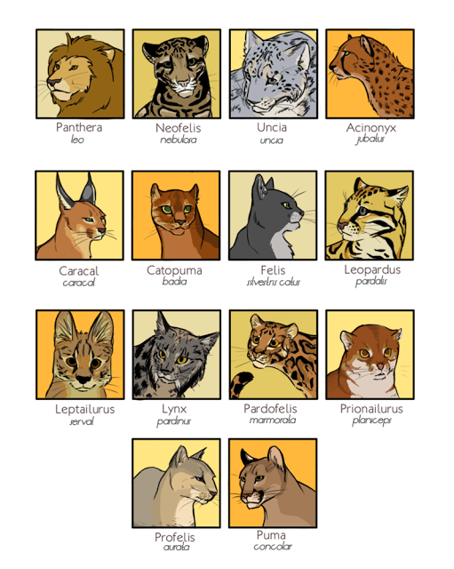 original source : http://naroclie.deviantart.com/art/Felidae-154416277